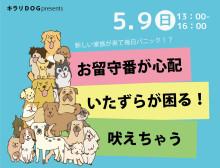 キラリDOG子犬無料相談会